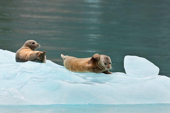 Alaska by Ray Bulson (27 pics)