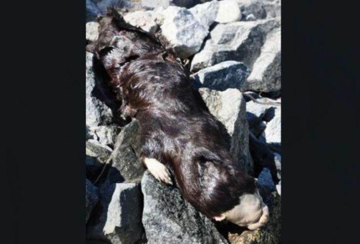 Strange Animal Found in Canada (6 pics)
