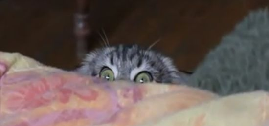Scary Pure Evil Cat