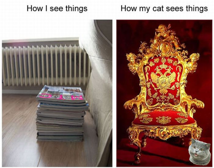 How My Cat Sees Things (6 pics)