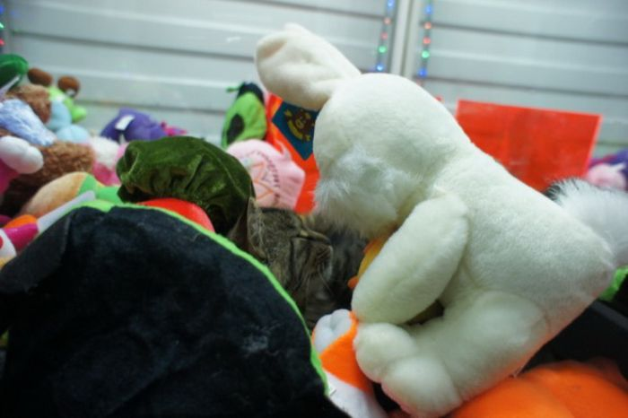 Look Who Is Sleeping Inside the Claw Machine (2 pics)