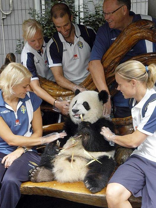 Famous Athletes with Pandas (17 pics)