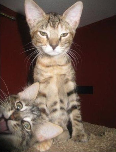 Hilarious Animal Photobombs (23 pics)