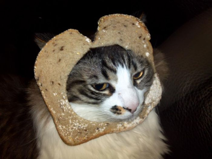 Bread on Cat (60 pics)