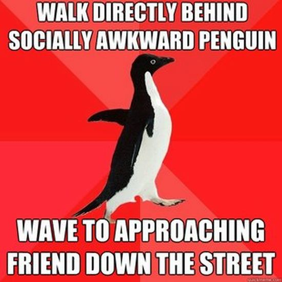 Socially Awesome Penguin (52 pics)