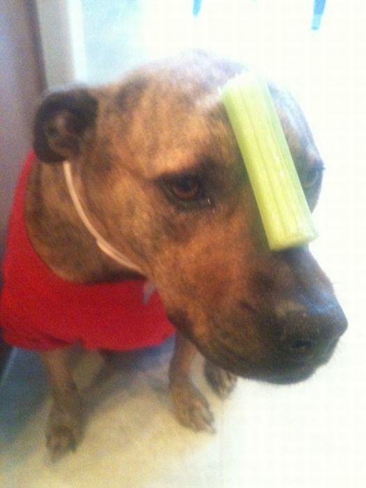 Food on My Dog (59 pics)
