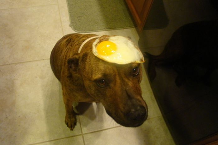 Food on My Dog (59 pics)