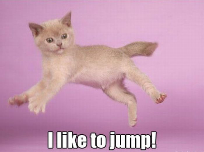 Seymour the Kitten (15 pics)