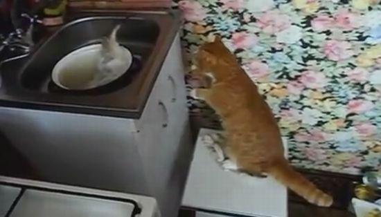 Funny Cat vs Big Fish