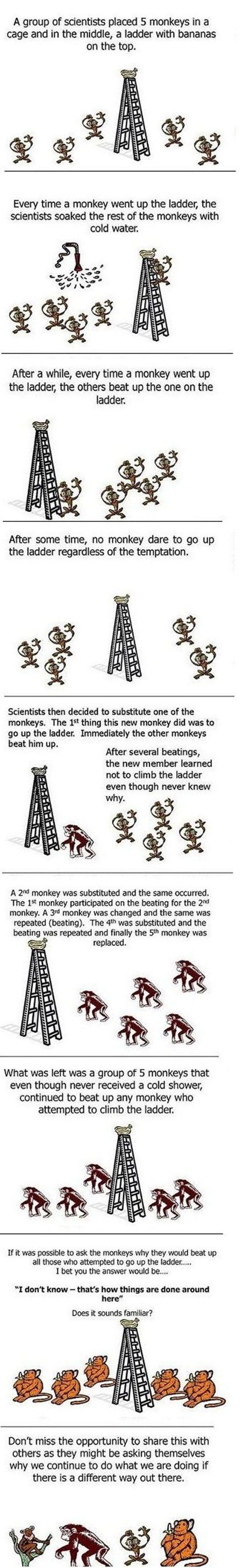 Five Monkeys (7 pics)