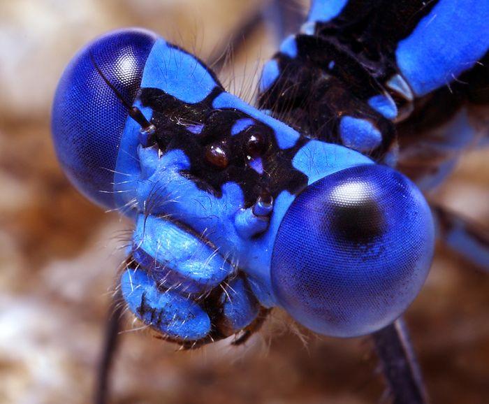 Macro Bug Portraiture by Thomas Shahan (28 pics)
