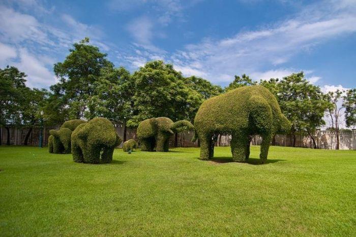 Topiary Art (25 pics)