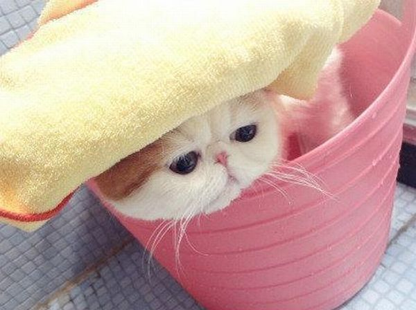 Very Cute Cat Taking Bath (7 pics)