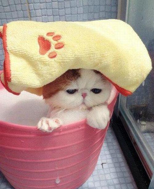 Very Cute Cat Taking Bath (7 pics)