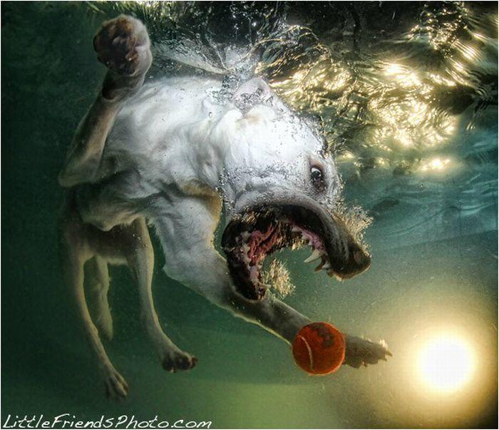 Underwater Dogs (18 pics)