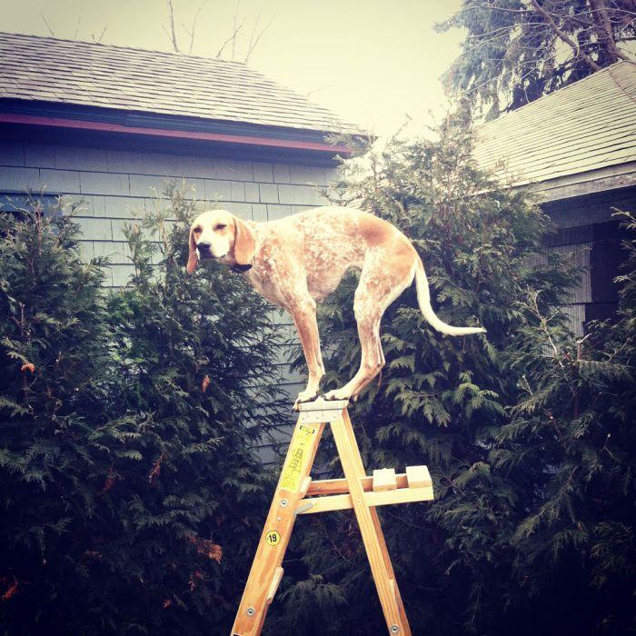 Dog Photos (20 pics)
