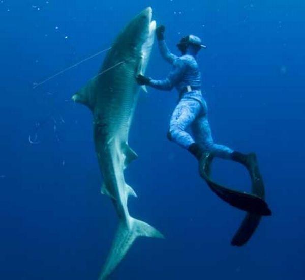 Hot girls scuba diving 45 pics - Foto dive nude ...