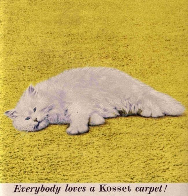 Vintage Cat Advertisements (21 pics)