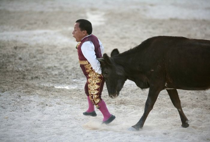 Dwarf Bullfighters from Colombia and Mexico (22 pics)