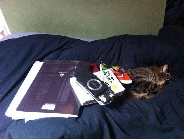 Cat Sleeping (17 pics)