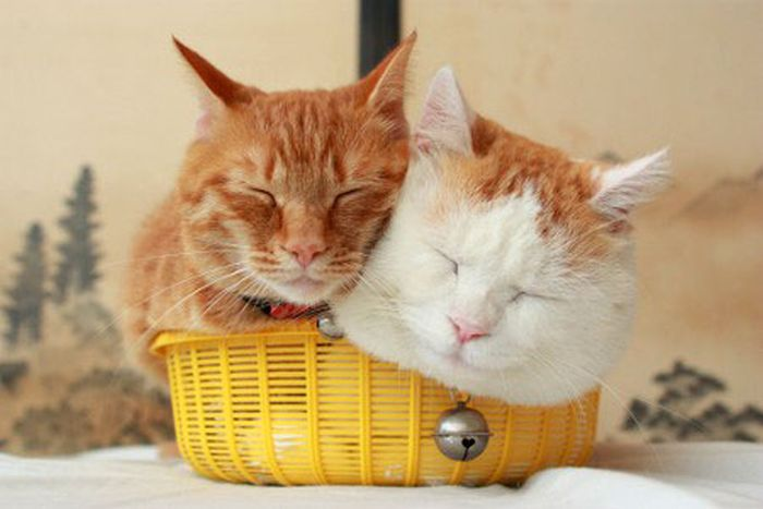 Two Kitties In A Basket (4 pics)