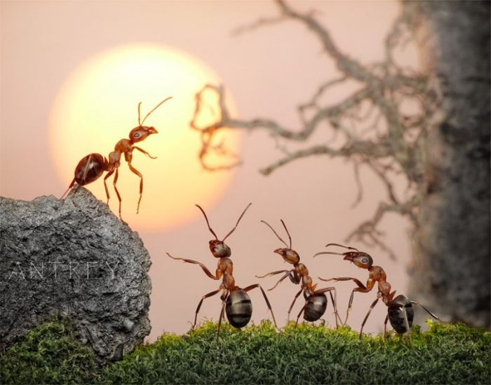 Ant Stories (28 pics)