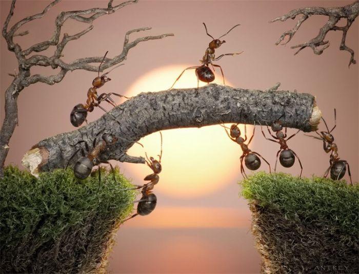 Ant Stories (28 pics)