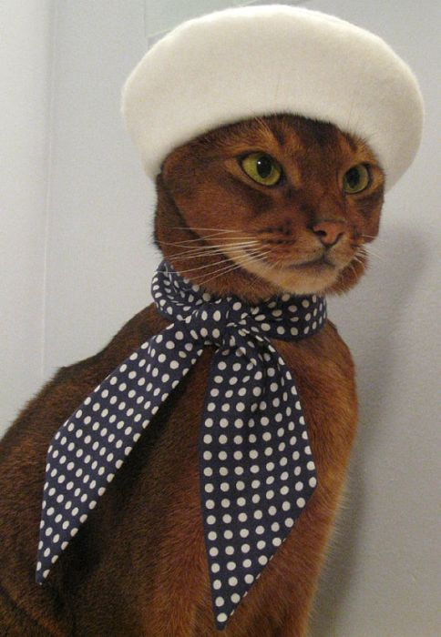 Cat Fashion (34 pics)