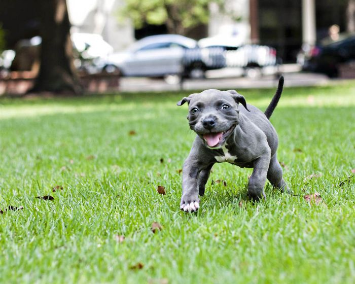 Puppy Learns to Walk (13 pics)