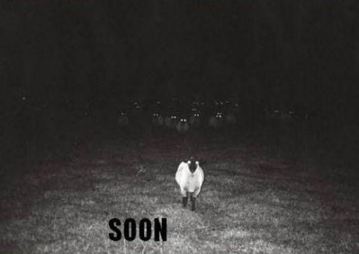 Soon, Very Soon (17 pics)