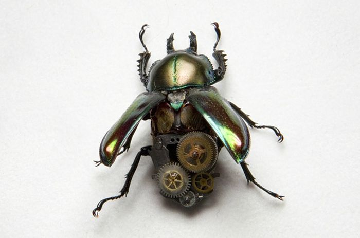 Steampunk Insects (27 pics)