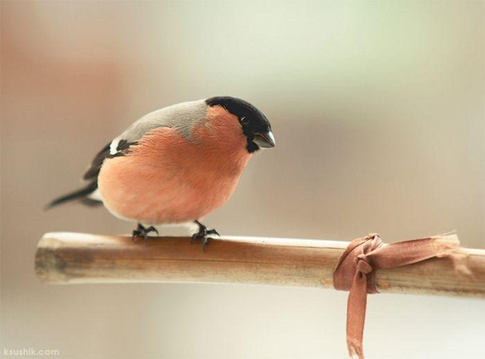 Great Bird Photography (34 pics)