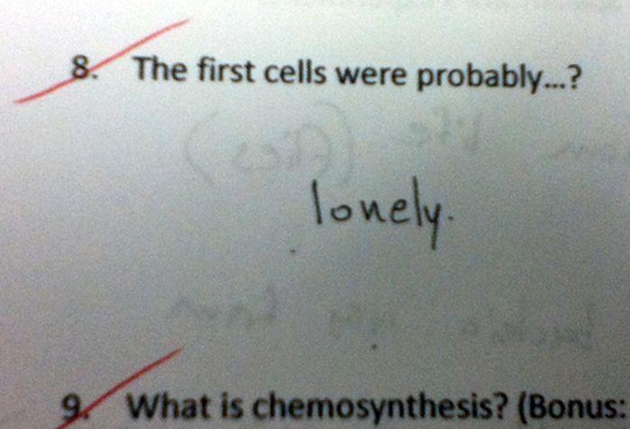 Funny Exam Answers. Part 6 (23 pics)