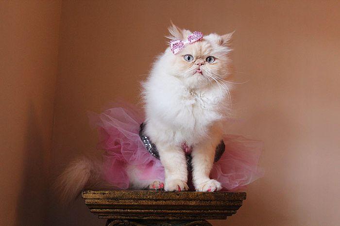 Сute Cat (58 pics)