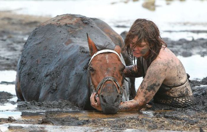 Rescuing a Horse Stuck in Mud (11 pics)
