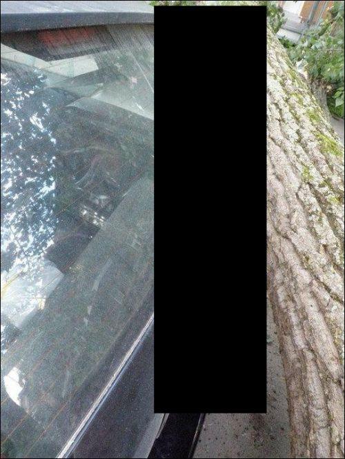 Lucky Car (3 pics)