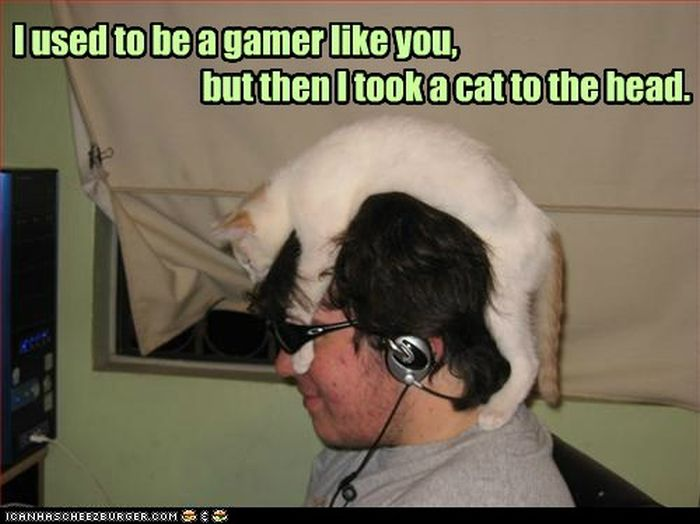 Lol Cats (60 pics)