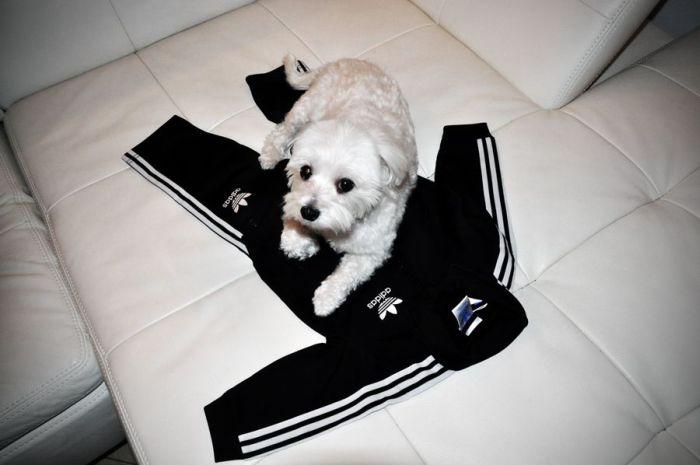 Awesome Dog Costume (20 pics)