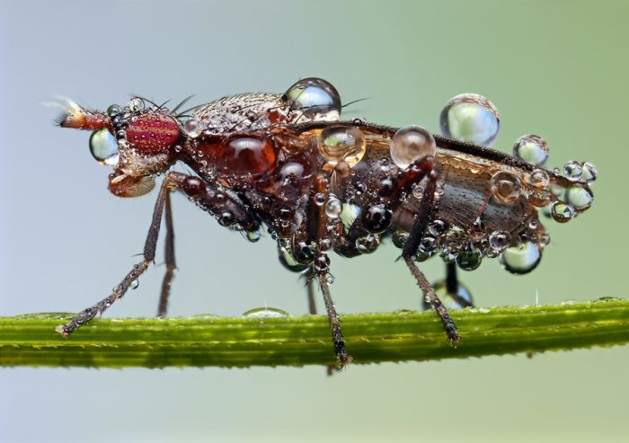 Insects Cope in a Downpour (40 pics)
