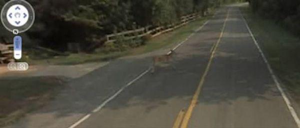 It Killed Bambi (3 pics)
