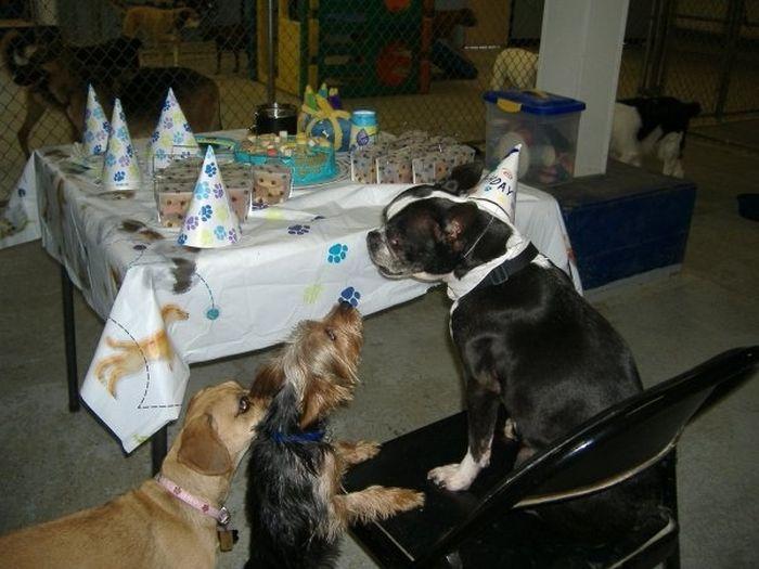 Animal Parties (31 pics)