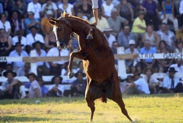 Horses vs Humans (20 pics)