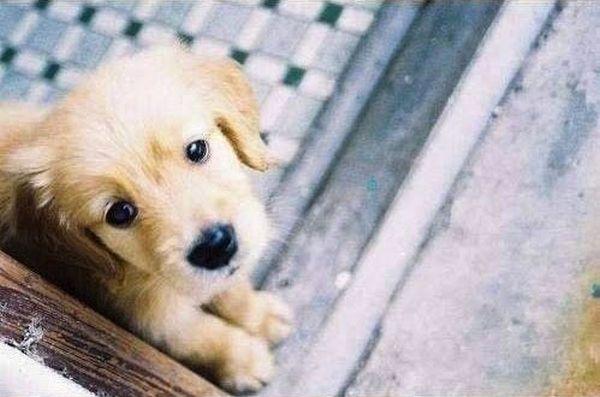 Cute Puppies (42 pics)
