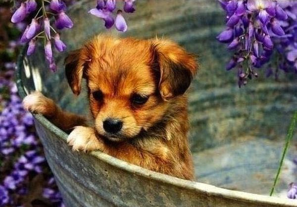 Cute Puppies (42 pics)
