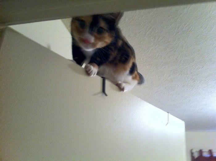 Ninja Cats (21 pics)