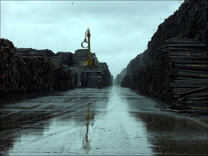Byholma - World's Largest Timber Storage (6 pics)