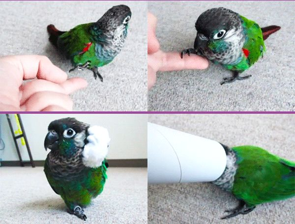 Cute Little Bird (8 gifs)