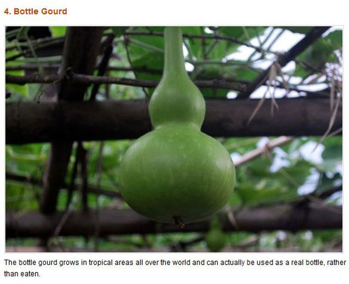 Strange Fruits & Vegetables (12 pics)