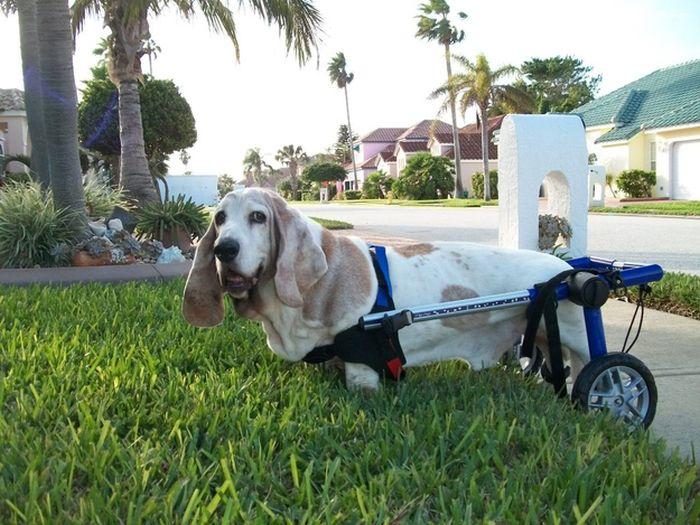 perros con movilidad reducida