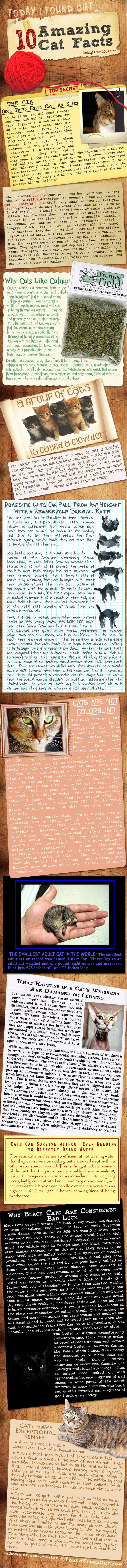 Amazing Cat Facts (infographic)